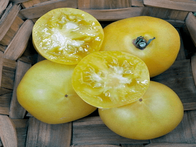 Tomate blanche