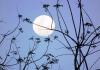 Calendrier lunaire potager juin 2020