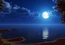 Calendrier lunaire potager juillet 2021