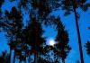 Calendrier lunaire jardinage aout 2020