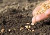 Semis de graines