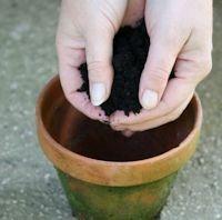 Préparation des pots